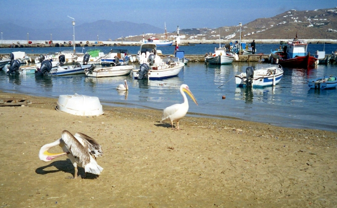 Picture of pelicans and fishing boats along the harbor at Mykonos, Greece