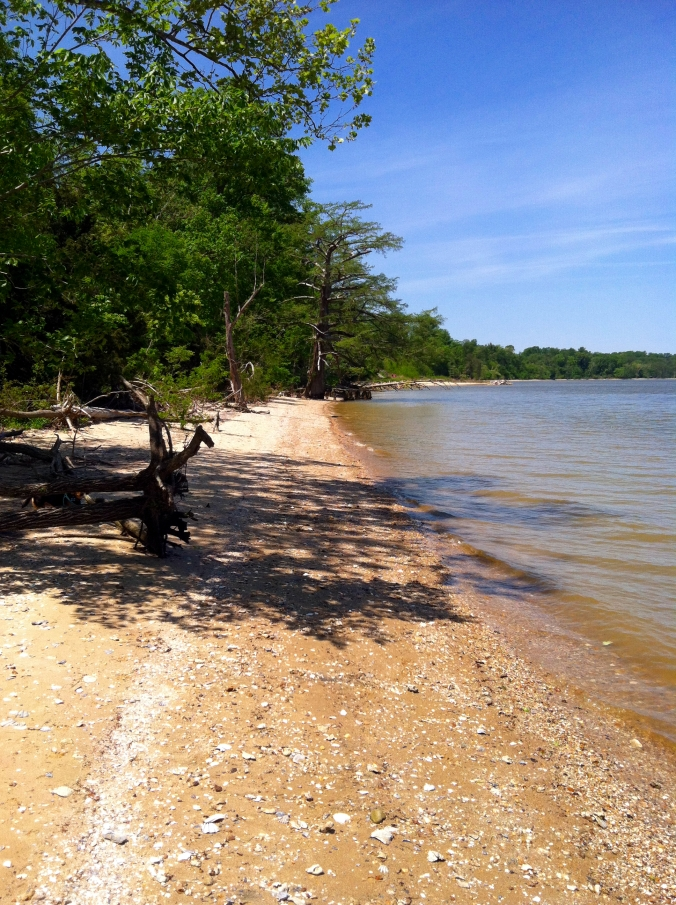 Picture of the beach along the James River at Chippokes State Park in Virginia
