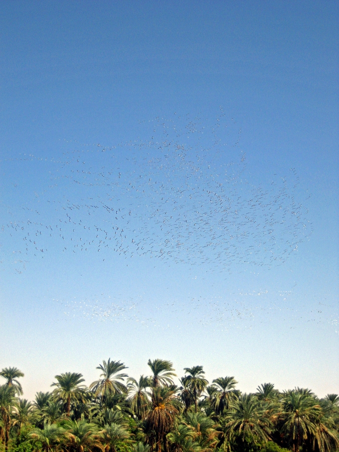 Picture of birds along the Nile in Egypt