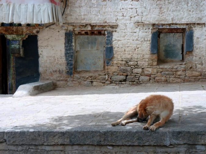 Picture of dog at Sera Monastery in Lhasa, Tibet