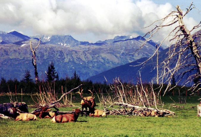 Picture of Alaska Wildlife Conservation Center