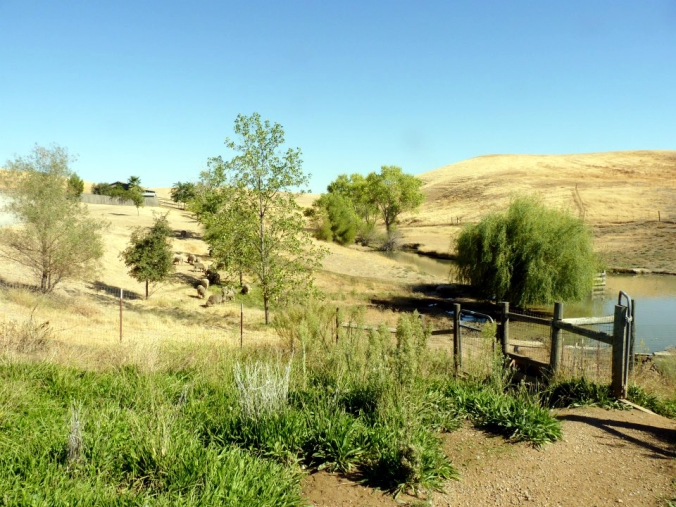 Picture of the countryside in Orland, California