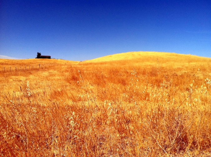 Picture of countryside in Orland, California