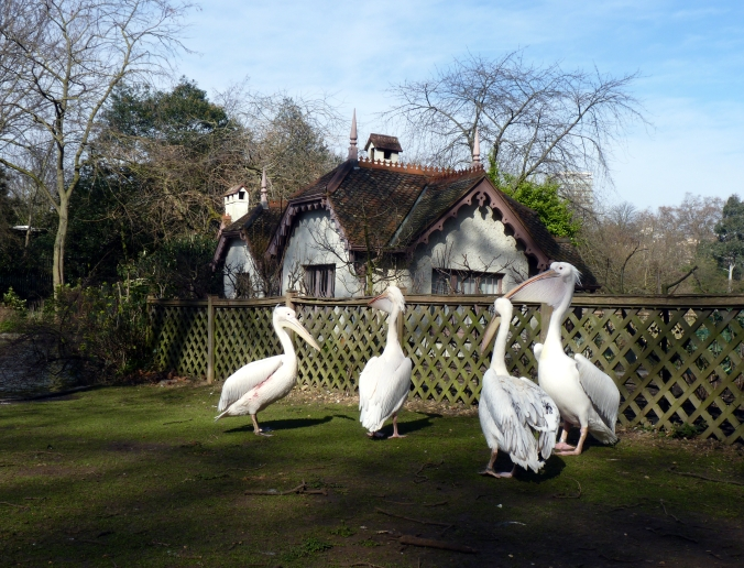 Picture of waterfowl and Duck Island Cottage in St James's Park, London, UK